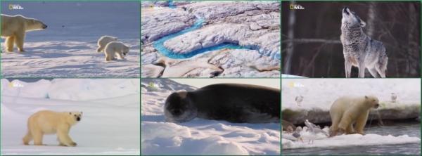 Мир дикой природы. Арктика / World of the Wild. Arctic (2016)