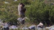 Nat Geo Wild: Мир дикой природы / World of the Wild [01-13 из 13] (2016) HDTVRip от Kaztorrents | P1